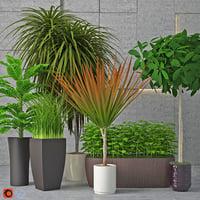 3D houseplant 7