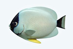 masked anglefish fish 3D