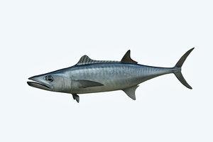 3D king mackerel model