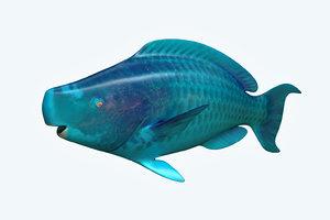 3D parrotfish fish model