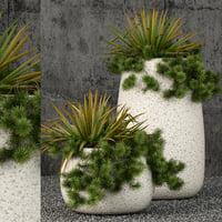 plants 57 3D model