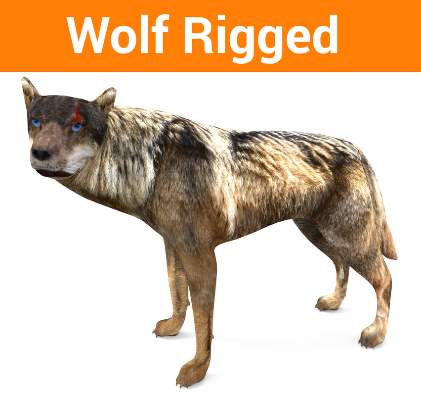 wolf rigged 3D