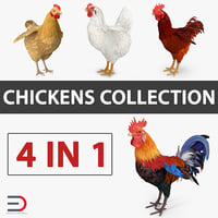 Chicken and Rooster Collection