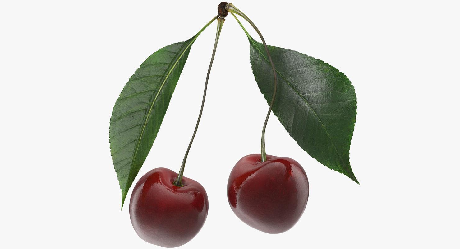 3D cherry realistic model