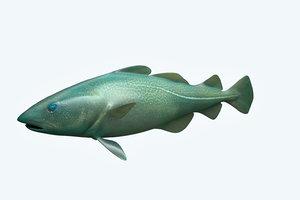 3D cat fish