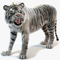 White Sumatran Tiger (Fur, Animated)