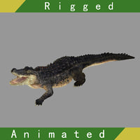 Crocodile Rigged Animated