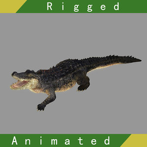 crocodile rigged animation 3D model