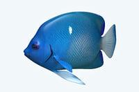 anglefish 2 fish 3D