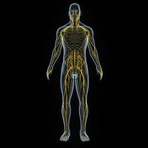 3D nervous body