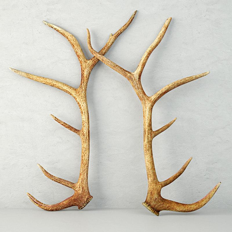 monumental unmounted elk antlers model