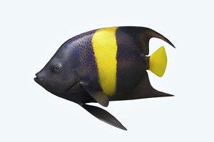 3D anglefish 3 fish model
