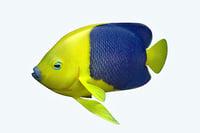 3D anglefish 4 fish