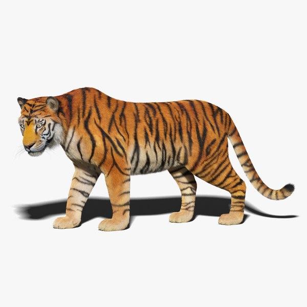 tiger fur animation 3D