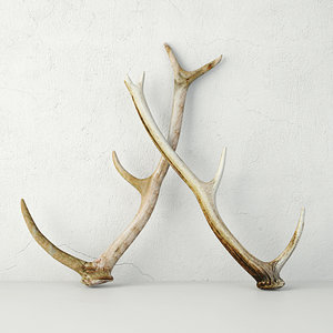 3D naturally-shed deer antlers
