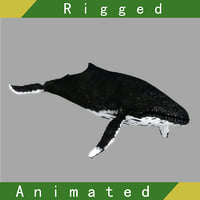 whale rigged animation 3D model