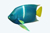 anglefish fish 3D model