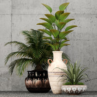 3D model plants 59
