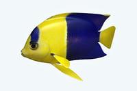 3D anglefish 6 fish