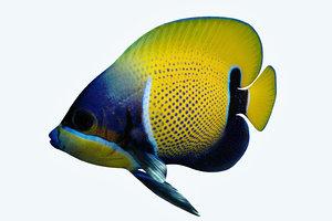 3D anglefish 7 fish model