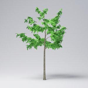 mountain maple - 300cm model