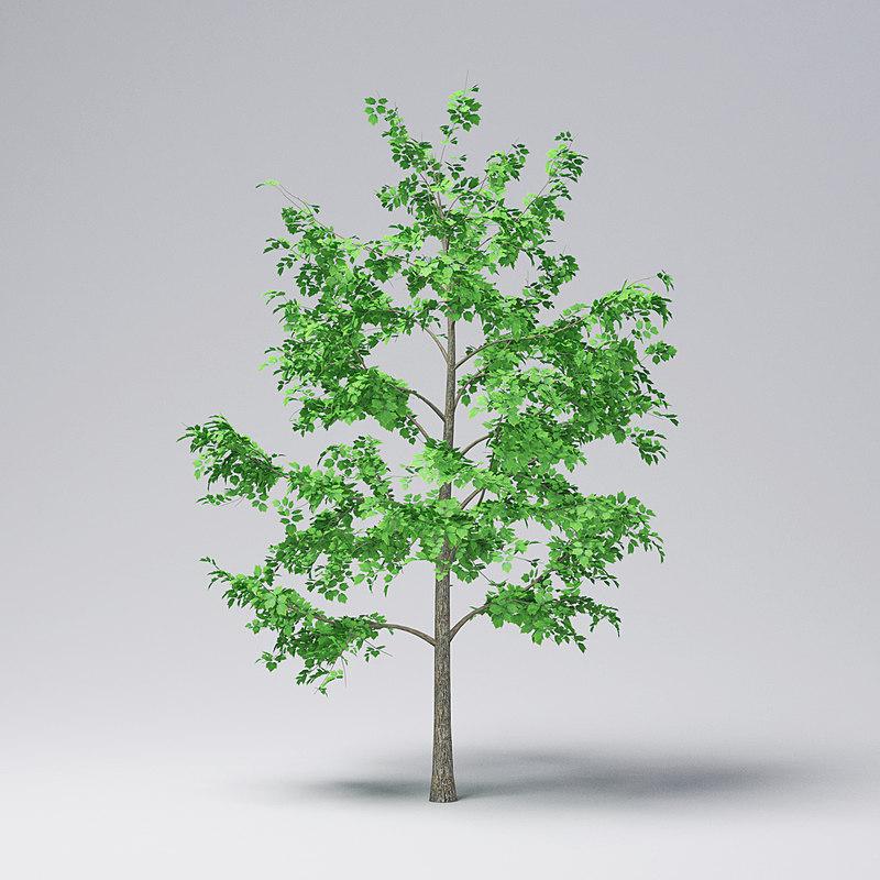 3D model mountain maple - 370cm