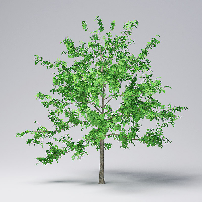 3D mountain maple - 420cm