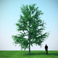 3D mountain maple - 960cm