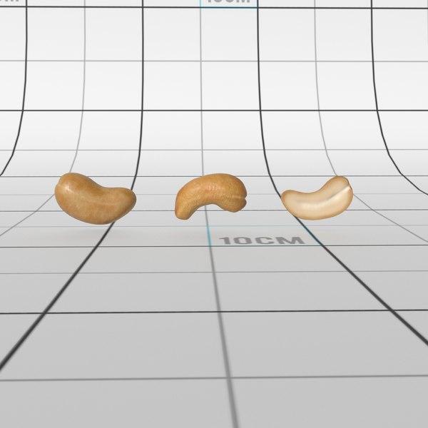 cashew nut model