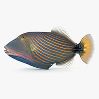 undulate triggerfish 3D model