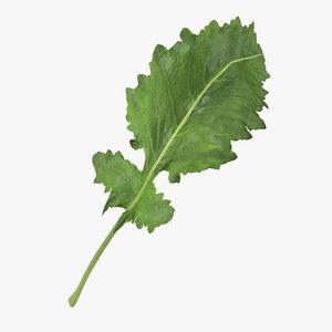 3D kohlrabi leaf