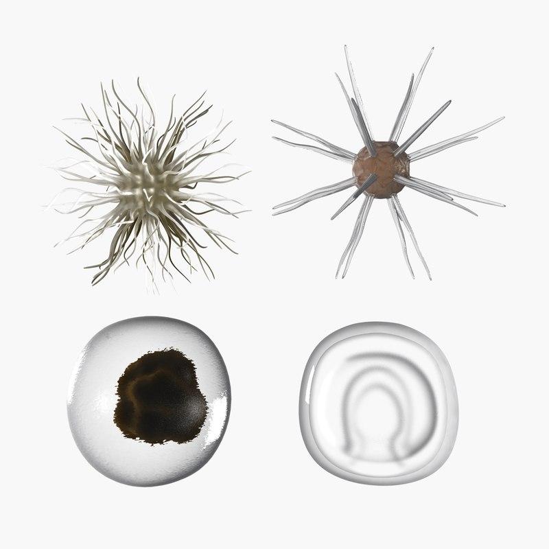 plankton 3D model