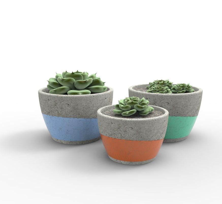 potted succulent plant 3D model