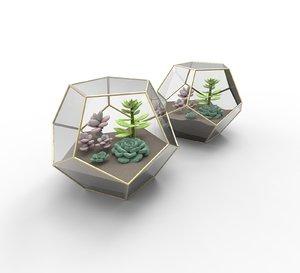 terrarium succulents 3D