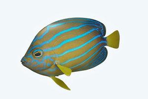 3D anglefish fish