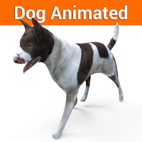 Dog animated