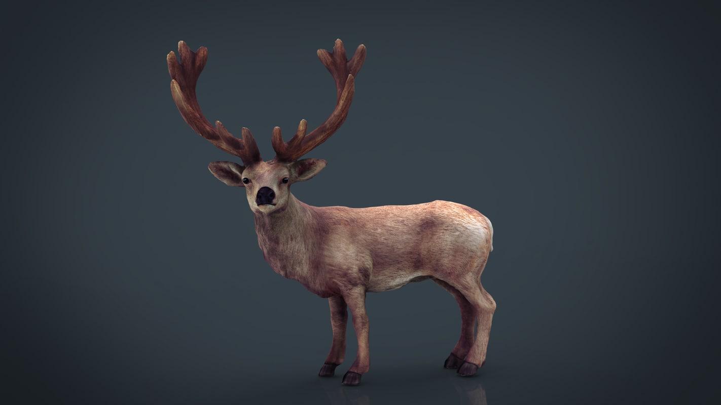 red deer 3D model
