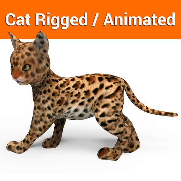 3D model cat rigged animation