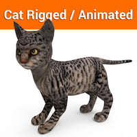 cute cat rigged animated model