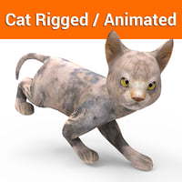 cat rigged animated model