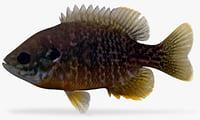 hybrid sunfish 3D model
