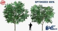 prosopis cineraria trees optimized model