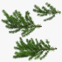 christmas fir branches 3D model
