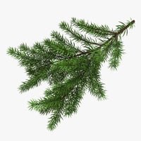 3D christmas fir branches model