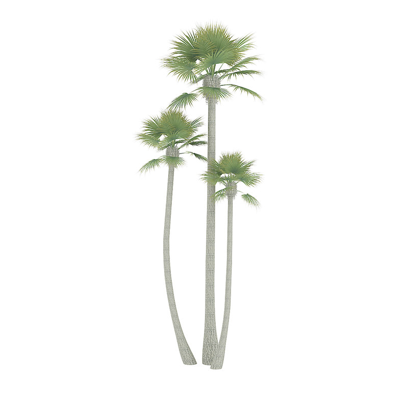 3D straight palm trees