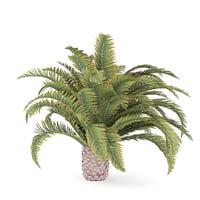 Low Palm Tree