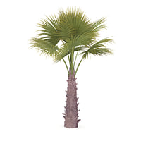 3D windmill palm tree model