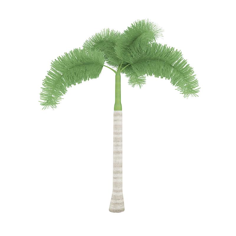 foxtail palm tree 3D