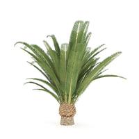 3D model pineapple palm tree