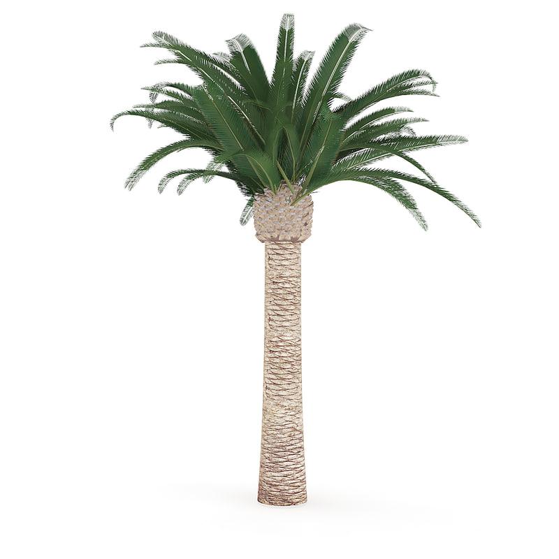 3D pineapple palm tree